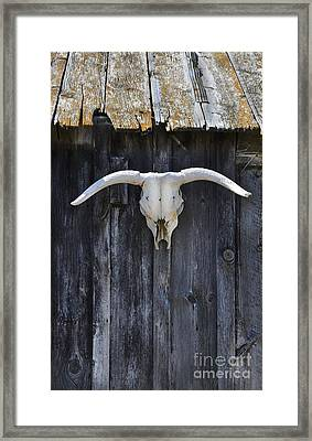 Cow Skull On A Barn Framed Print by Jill Battaglia