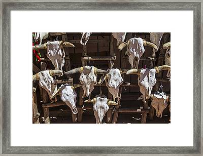 Cow Skulls Framed Print by Garry Gay