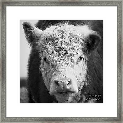 Cow Square Framed Print by Edward Fielding