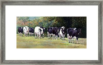 Cow Trail Framed Print by Anthony Forster