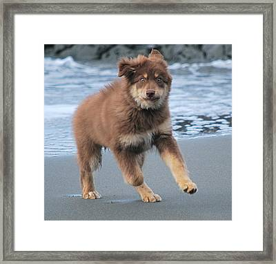 Cowboy At The Ocean Framed Print