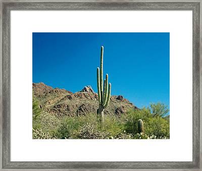 Cowboy Courtry Arizona 3 Framed Print by Douglas Barnett