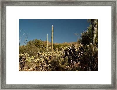 Cowboy Courtry Arizona 4 Framed Print by Douglas Barnett