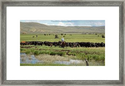 Cowboy Herding On A Cattle Ranch Framed Print by Jim West
