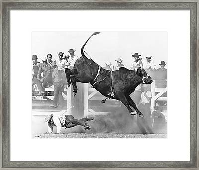 Cowboy Riding A Bull Framed Print by Underwood Archives