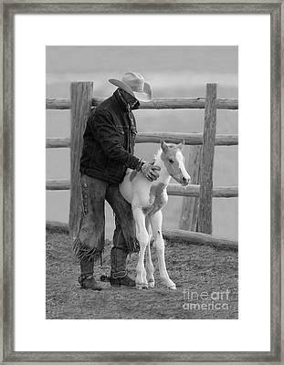 Cowboy Steadies Foal Framed Print by Carol Walker
