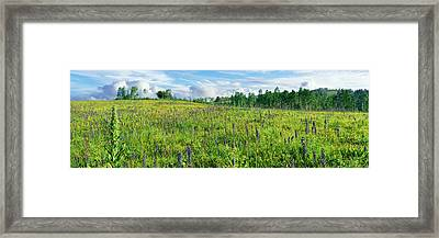 Cowparsnip And Larkspur Wildflowers Framed Print by Panoramic Images