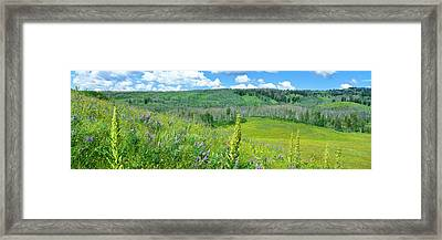 Cowparsnip, Lupine And Larkspur Framed Print by Panoramic Images