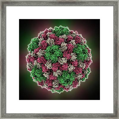 Cowpea Chlorotic Mottle Virus Capsid Framed Print by Science Photo Library