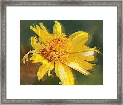 Cowpen Daisy No. 4 Framed Print