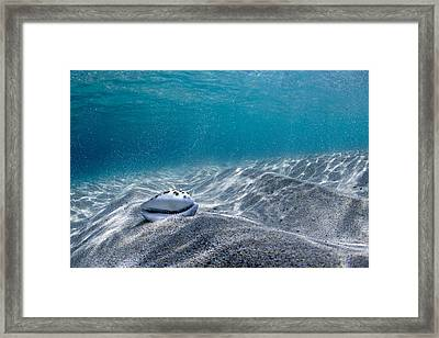 Cowrie Ridge Framed Print by Sean Davey