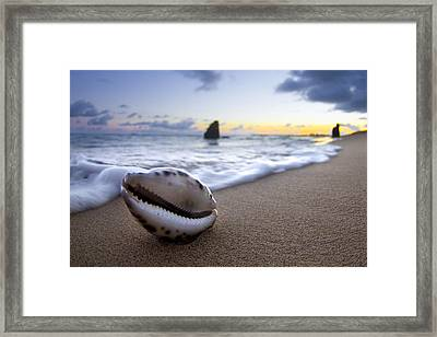 Cowrie Sunrise Framed Print by Sean Davey