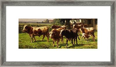 Cows Framed Print by Adolf bei Dachau