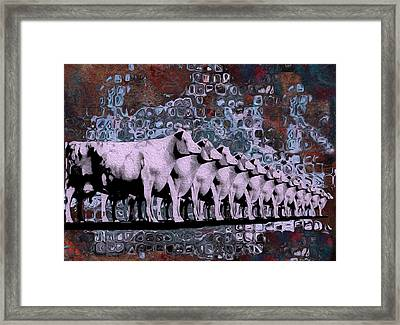 Cows In Order 2 Framed Print