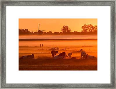 Cows In The Mist Framed Print