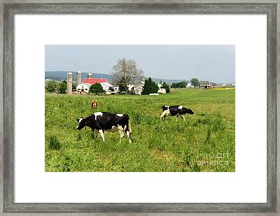 Cows In The Pasture Framed Print by Paul Ward
