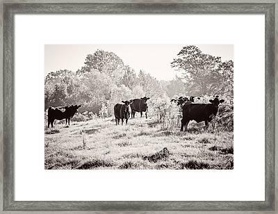 Cows Framed Print by Karen Broemmelsick