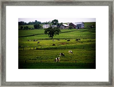 Cows On The Farm Amish Country Framed Print