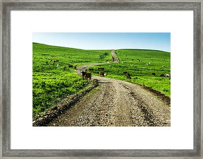 Cows On The Road Framed Print