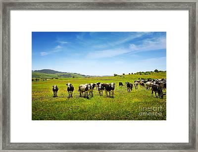 Cows Pasturing Framed Print by Carlos Caetano