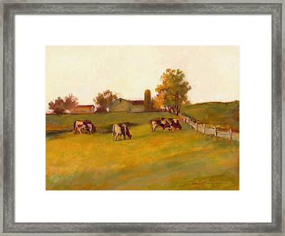 Cows2 Framed Print by J Reifsnyder