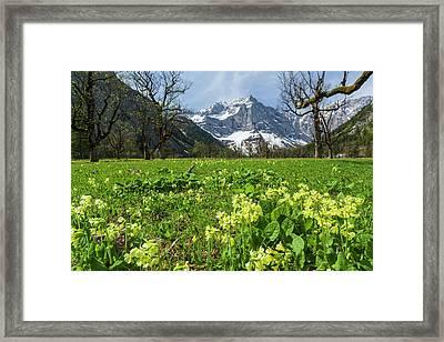 Cowslip (primula Veris Framed Print by Martin Zwick