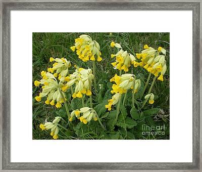 Cowslips Wildflowers. Framed Print by Ann Fellows