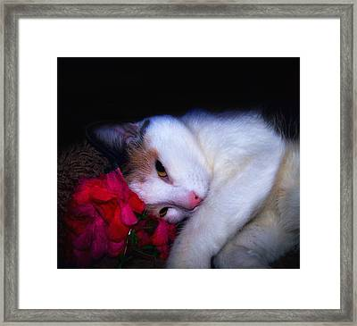Coy Framed Print by Camille Lopez