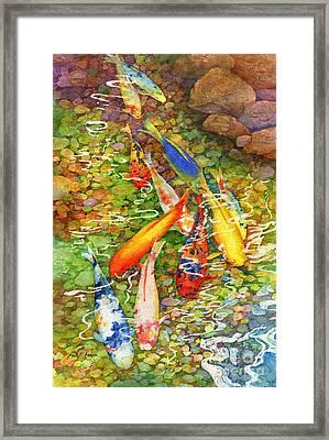Coy Koi Framed Print