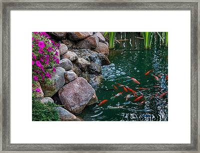 Koi Pond II Framed Print