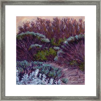 Coyote Brush And Willows Framed Print