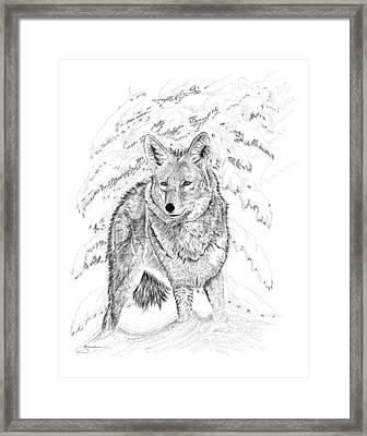 Coyote Framed Print
