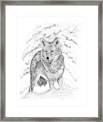 Coyote Framed Print by Carl Genovese