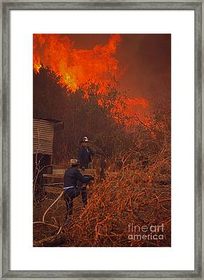 Coyote Fire - 1969 Framed Print