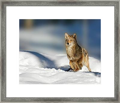 Coyote Go Go Go Framed Print