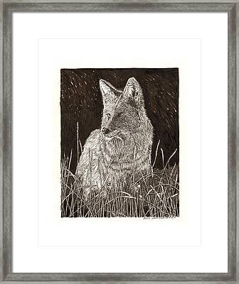 Coyote Night Hunting Framed Print