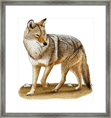 Coyote Framed Print by Roger Hall