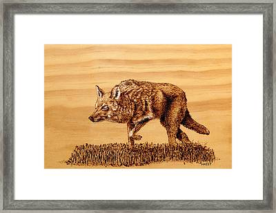 Coyote Framed Print by Ron Haist
