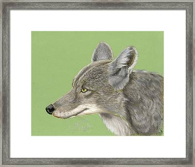 Coyote Framed Print by Ruth Seal