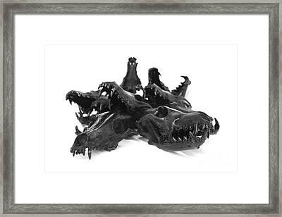 Coyote Skulls Set 1 Framed Print by Marilee Spencer