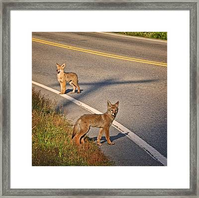 Framed Print featuring the photograph Coyotes At The Crossroads by Peggy Collins