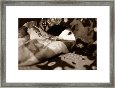 Cozy Cavy Framed Print by Luke Moore