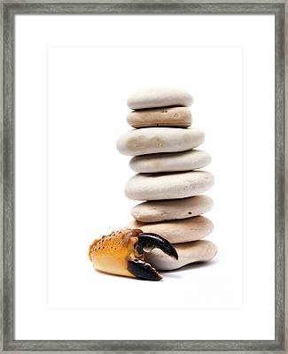 Crab And Pebbles Framed Print by Sinisa Botas