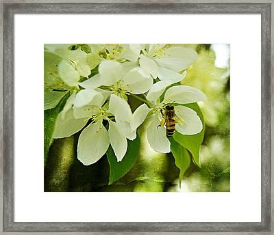 Crab-apple Blossoms And Honey Bee In Paint Framed Print by Carol Toepke