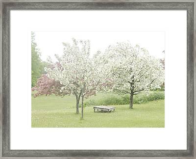 Crab Apple Blossoms Framed Print by Susan Crossman Buscho