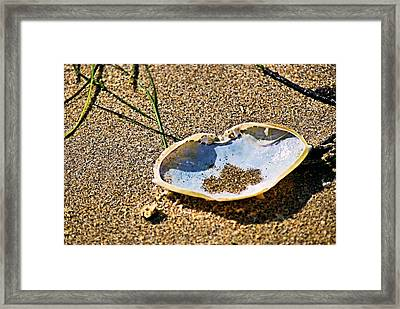 Framed Print featuring the photograph Crab Carapace by Bob Wall