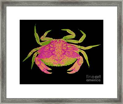 Crab Framed Print by D Roberts