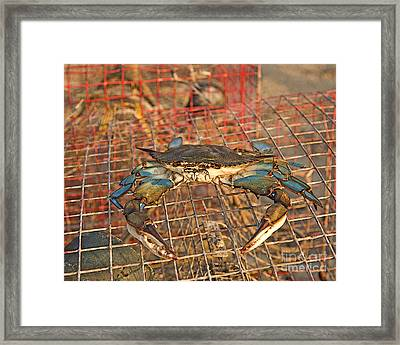 Crab Got Away Framed Print