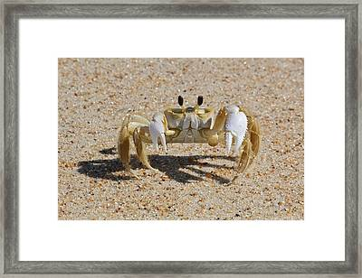 Crab On Sand Framed Print by David Wells / Eyeem