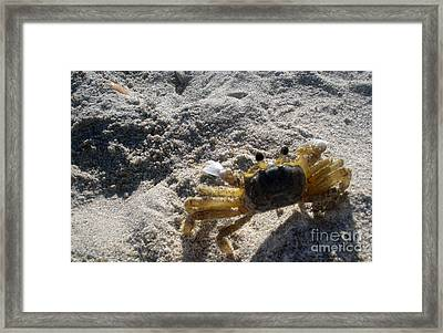 Framed Print featuring the photograph Crab On The Look-out by Megan Dirsa-DuBois